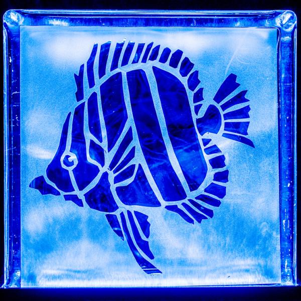 angelfishblue
