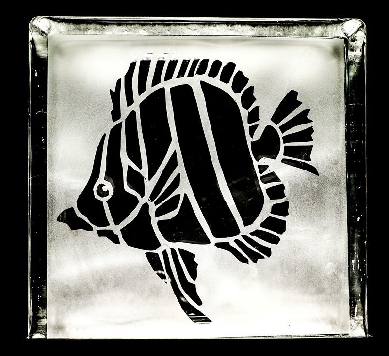 angelfishclear